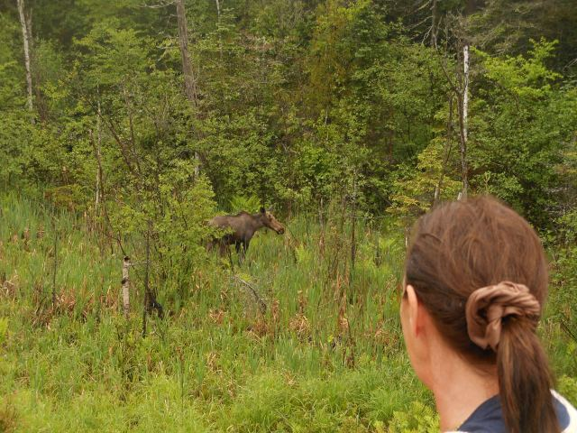 Rosella and the moose.JPG